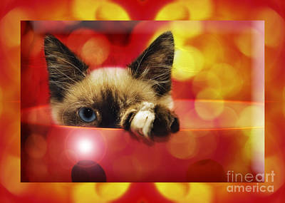 Andee Design Feline Photograph - Disco Kitty 2 by Andee Design