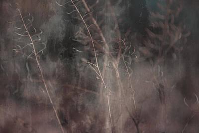 Photograph - Discrete by Mark  Ross