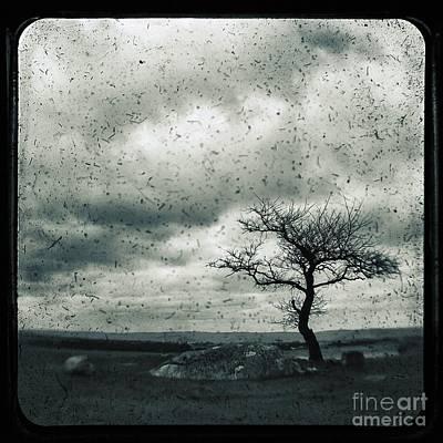 Photograph - Disdain by Andrew Paranavitana