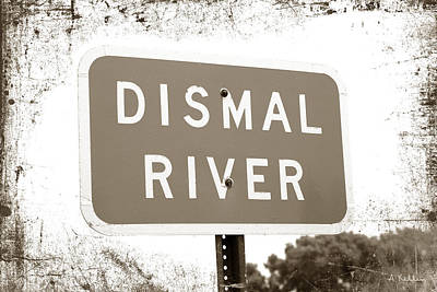 Photograph - Dismal River by Andrea Kelley