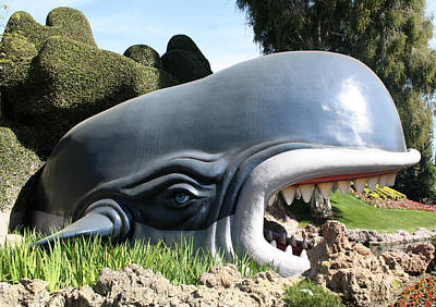 Photograph - Disney Whale by David Nicholls