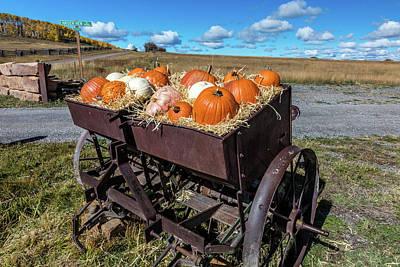 Hastings Photograph - Display Of Halloween Pumpkins, Hastings by Panoramic Images