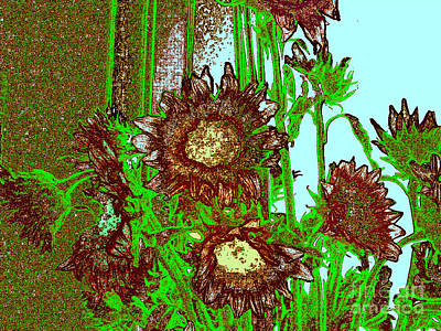 Photograph - Display Of Sunflowers by Merton Allen
