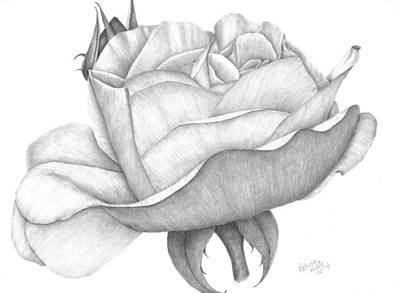 Drawing - Distant Drum Rose Bloom by Patricia Hiltz