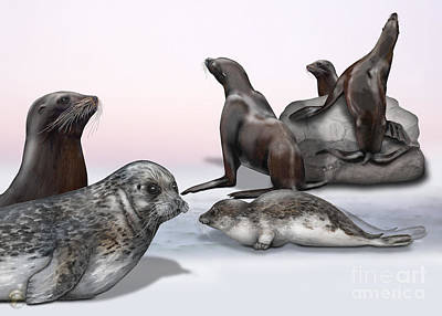 Painting - Distinguishing Marks - Eared Seals Otariidae And Earless Seals Phocidae  by Urft Valley Art