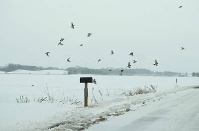 Snowy Roads Photograph - Disturbing The Winter Foragers by Julie Dant
