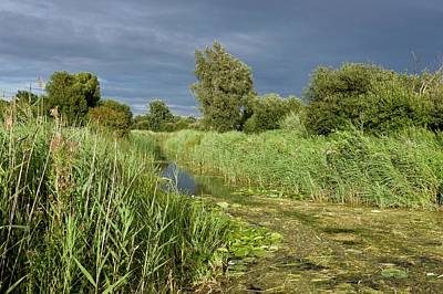 Ditch Photograph - Ditch And Reedbeds by Bob Gibbons