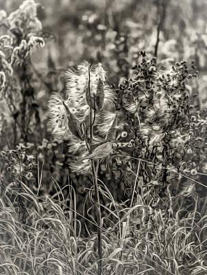 Milkweed Photograph - Ditch Beauty Oil Sepia by Steve Harrington