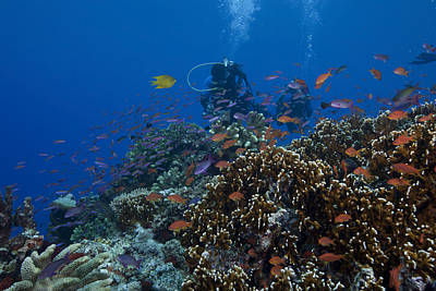 Diver And Schooling Anthias Fish Art Print by Terry Moore