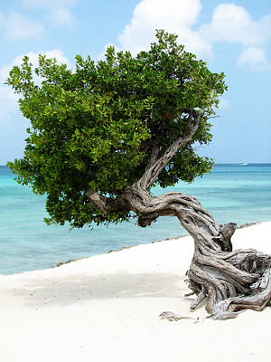 Divi Divi Tree In Aruba Art Print