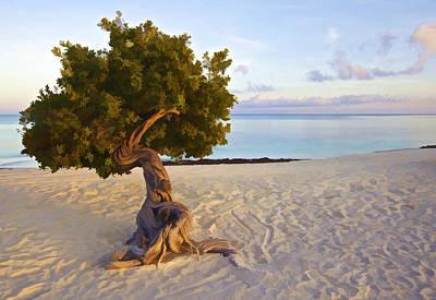 Divi Divi Tree Of Aruba Art Print by David Letts