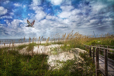 Soaring Photograph - Divine Beach Day  by Betsy Knapp