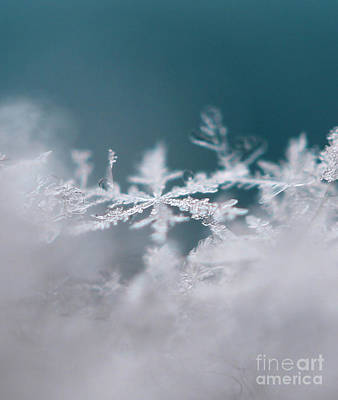 Photograph - Divine Snowflake by Stacey Zimmerman