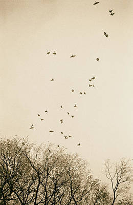 Photograph - Diving Sparrows by Dave Beckerman