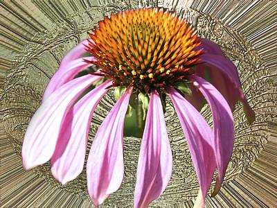 Photograph - Divinity Gold - Echinacea by Richard Thomas