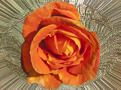 Photograph - Divinity Gold - Orange Rose by Richard Thomas