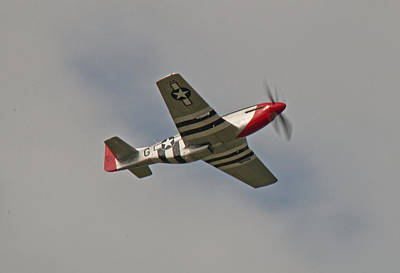 Photograph - Dixie Wing P-51 Red Nose by John Black