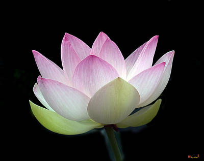 Photograph - Dl002lotus Beauty--pale And Demure Dl002 by Gerry Gantt
