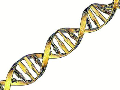 Double Helix Photograph - Dna Double Helix Reflecting Microarray by Pasieka