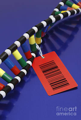 Dna Double Helix With Barcode Art Print