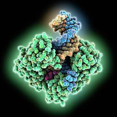 Dna Polymerase Bound With Dna Art Print