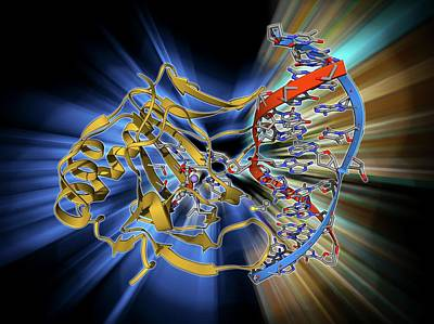 Dna Repair Enzyme Art Print by Laguna Design