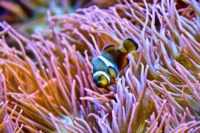 Nemo Photograph - Do I Look Like A Clown To You by Angelina Vick