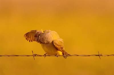Fowl. Wildlife Photograph - Do My Pits Stink by Jeff Swan