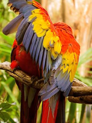 Macaw Photograph - Do Not Disturb by Zina Stromberg