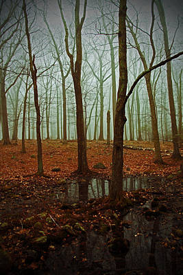 Photograph - Do We Dare Go Into The Woods by Karol Livote