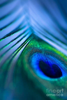 Iridescent Photograph - Do You Dream In Colour? by Jan Bickerton