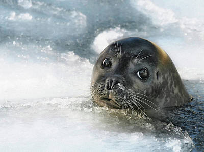 Seal Photograph - Do You Have A Fish ? by Holger Droste