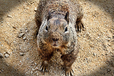 Photograph - Do You Have Any Peanuts by Judy Vincent