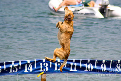 Photograph - Dock Dog by Deb Kline