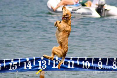 Photograph - Dock Dog by Deb Kline