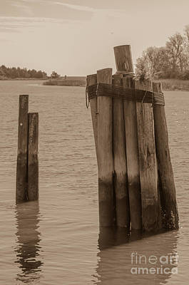 Photograph - Dock Pilings by Dale Powell