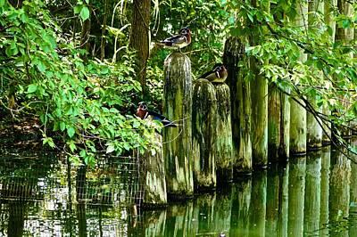 Photograph - Docking Ducks by Ricardo J Ruiz de Porras