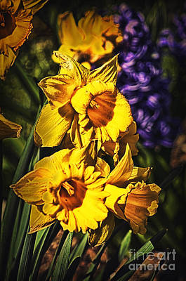Owls - Doctored Daffodils by Joe Geraci