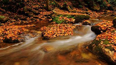Photograph - Dodd Creek Georgia by Daniel Woodrum