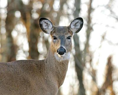 Photograph - Doe A Deer A Female Deer by Lara Ellis