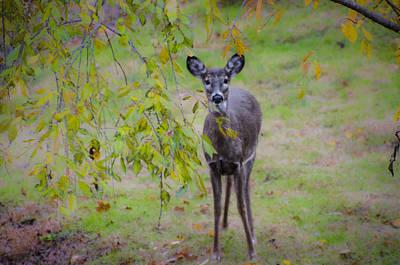 Dear Digital Art - Doe A Deer by Bill Cannon