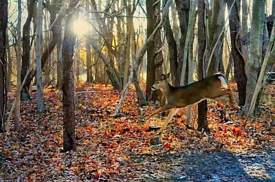 Photograph - Doe A Deer by Diana Angstadt