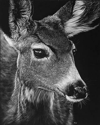 Mule Deer Drawing - Doe A Deer by Heather Ward