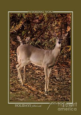 Photograph - Doe And Fawn Deer Wildlife Christmas Cards by Jai Johnson