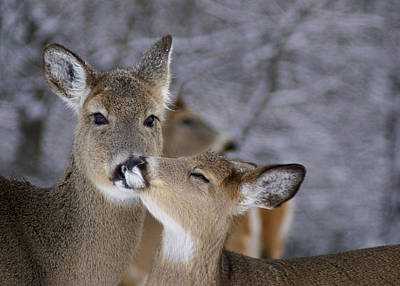 Photograph - Doe And Fawn by Larry Bohlin