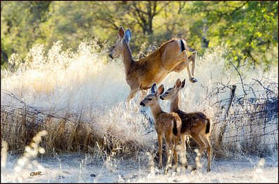 Photograph - Doe And Fawns... by Gary Rose
