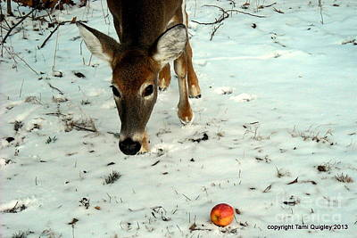 Photograph - Doe Eyes Her Apple by Tami Quigley