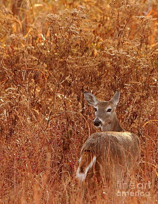 Doe In Autumn Red Grass Art Print