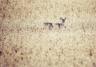 Photograph - Doe In Soy Field. by Cheryl Baxter