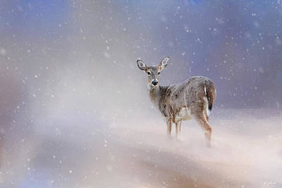 Doe In The Snow Art Print by Jai Johnson